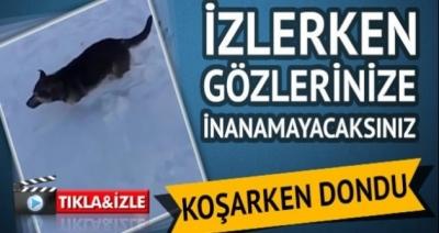 Vahşi Hayvanlar Aşırı Soğuktan Resmen Taş Kesildi